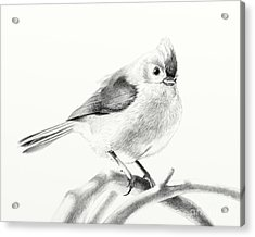 Acrylic Print featuring the drawing Bird On A Branch by Eleonora Perlic