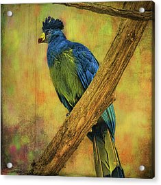 Acrylic Print featuring the photograph Bird On A Branch by Lewis Mann