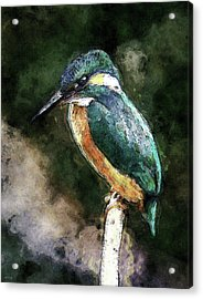 Bird On A Branch Acrylic Print by Phil Perkins