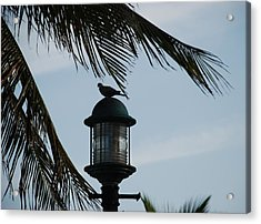 Bird On A Light Acrylic Print by Rob Hans