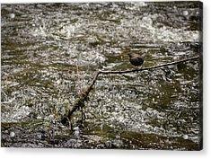 Bird On A River Acrylic Print
