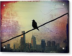 Bird On A Wire Acrylic Print by Bill Cannon