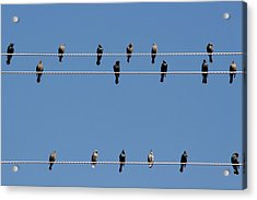 Bird On A Wire Acrylic Print by Christine Till