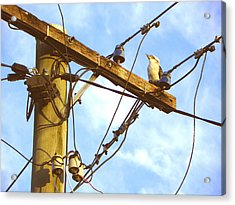 Bird On A Wire Acrylic Print by Evguenia Men