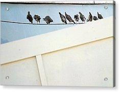 Bird On A Wire Acrylic Print by Jez C Self