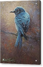 Bird On A Wire Acrylic Print by Mia DeLode