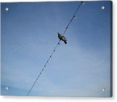 Bird On A Wire Acrylic Print by Tiara Moske