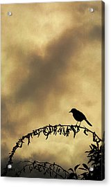 Bird On Branch Montage Acrylic Print by Dave Gordon