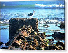 Bird On Perch At Beach Acrylic Print