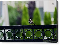 Acrylic Print featuring the photograph Bird On The Fence by Paul SEQUENCE Ferguson             sequence dot net