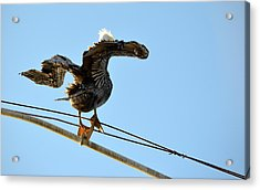 Acrylic Print featuring the photograph Bird On The Wire by AJ Schibig