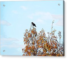 Bird On Tree Acrylic Print