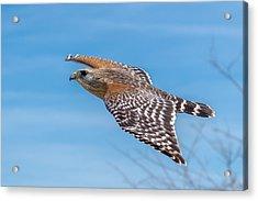 Bird Or Plane Acrylic Print