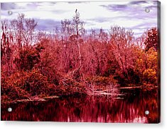 Acrylic Print featuring the photograph Bird Out On A Limb 2 by Madeline Ellis