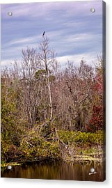 Acrylic Print featuring the photograph Bird Out On A Limb 3 by Madeline Ellis