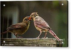 Bird Parenting Acrylic Print