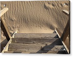 Bird Prints In The Sand Acrylic Print by Bryan Attewell