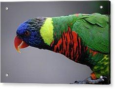 Bird Acrylic Print by Samantha Kimble