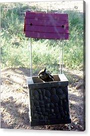 Bird Seed Thief Chipmunk Acrylic Print
