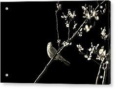 Bird Silhouette Acrylic Print by Martin Newman