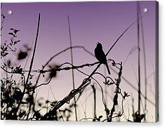 Bird Sings Acrylic Print by Angie Tirado