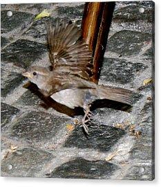 Bird Taking Flight Acrylic Print by Sara Summers