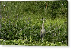 Bird Waiting Acrylic Print by Mark Minier