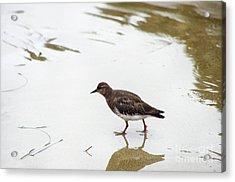 Acrylic Print featuring the photograph Bird Walking On Beach by Mariola Bitner
