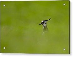 Acrylic Print featuring the photograph Bird-watching by Gabor Pozsgai