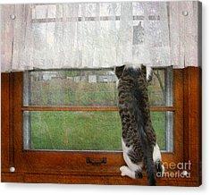 Bird Watching Kitty Cat Acrylic Print