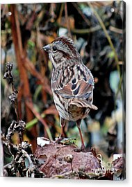 Acrylic Print featuring the photograph Bird With Grasshopper by Lila Fisher-Wenzel