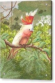 Cakatoo Acrylic Print