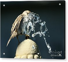 Birdbath Acrylic Print by Jan Piller