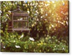 Birdcage In Spring Acrylic Print