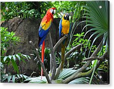 Parrots - Birds 03 Acrylic Print by Bruce Miller