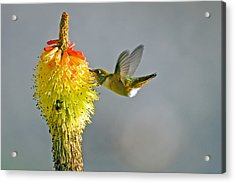 Birds And Bees Acrylic Print