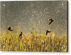 Acrylic Print featuring the photograph Birds And Bugs by Leland D Howard