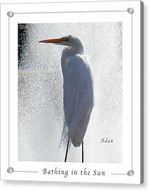 Birds And Fun At Butler Park Austin - Birds 2 Macro Poster Acrylic Print