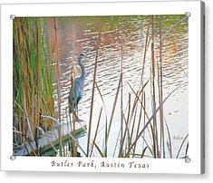 Birds And Fun At Butler Park Austin - Birds 4 Poster Greeting Card Acrylic Print by Felipe Adan Lerma