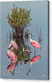 Birds And Mangrove Bush Acrylic Print