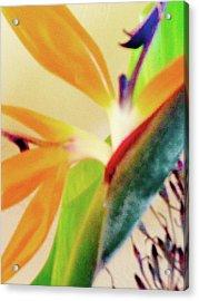 Birds Bromeliads Halyconia 2 Acrylic Print