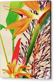 Birds Bromeliads Halyconia Acrylic Print