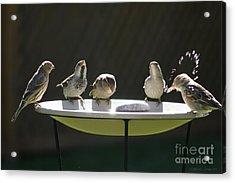 Birds Drinking From Bird Bath In Summer Sunshine Acrylic Print by Gordon Wood