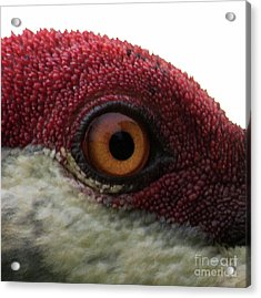 Birds Eye Acrylic Print by Brian Jones