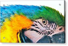 Acrylic Print featuring the photograph Bird's Eye View by Al Fritz