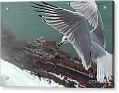Acrylic Print featuring the photograph Bird's Eye View by Charline Xia