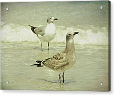 Seabirds View Acrylic Print by JAMART Photography