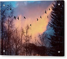 Acrylic Print featuring the photograph Birds Fly by Vladimir Kholostykh