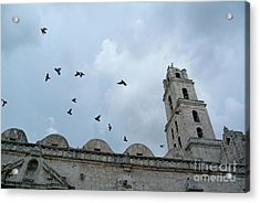 Birds Flying Above The Basilica And The Monastery Of Saint Francis Of Assisi Acrylic Print by Sami Sarkis