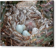 Birds Have Nests Acrylic Print by Mary Lee Dereske